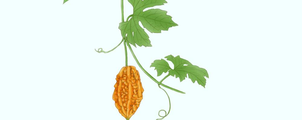 金铃子(癞葡萄)的功效与作用